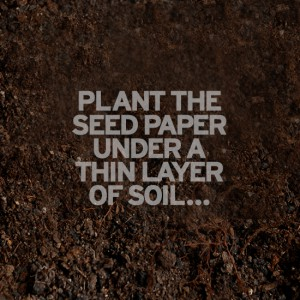 Branded-seed-paper-plant-seed-paper-in-soil