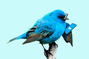 amt-twitter