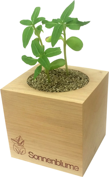 Picture of Eco Cube seed pot