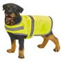 dog wearing high vis