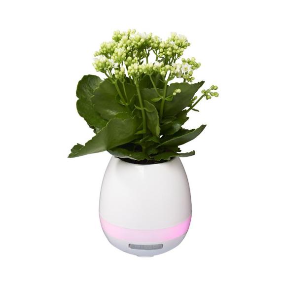 Picture of Green Thumb Flower Pot Speaker
