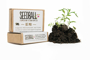 Seed ball match boxes with soil and plant growing next to it