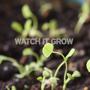 then watch it grow
