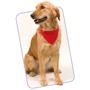 red dog collar bandana